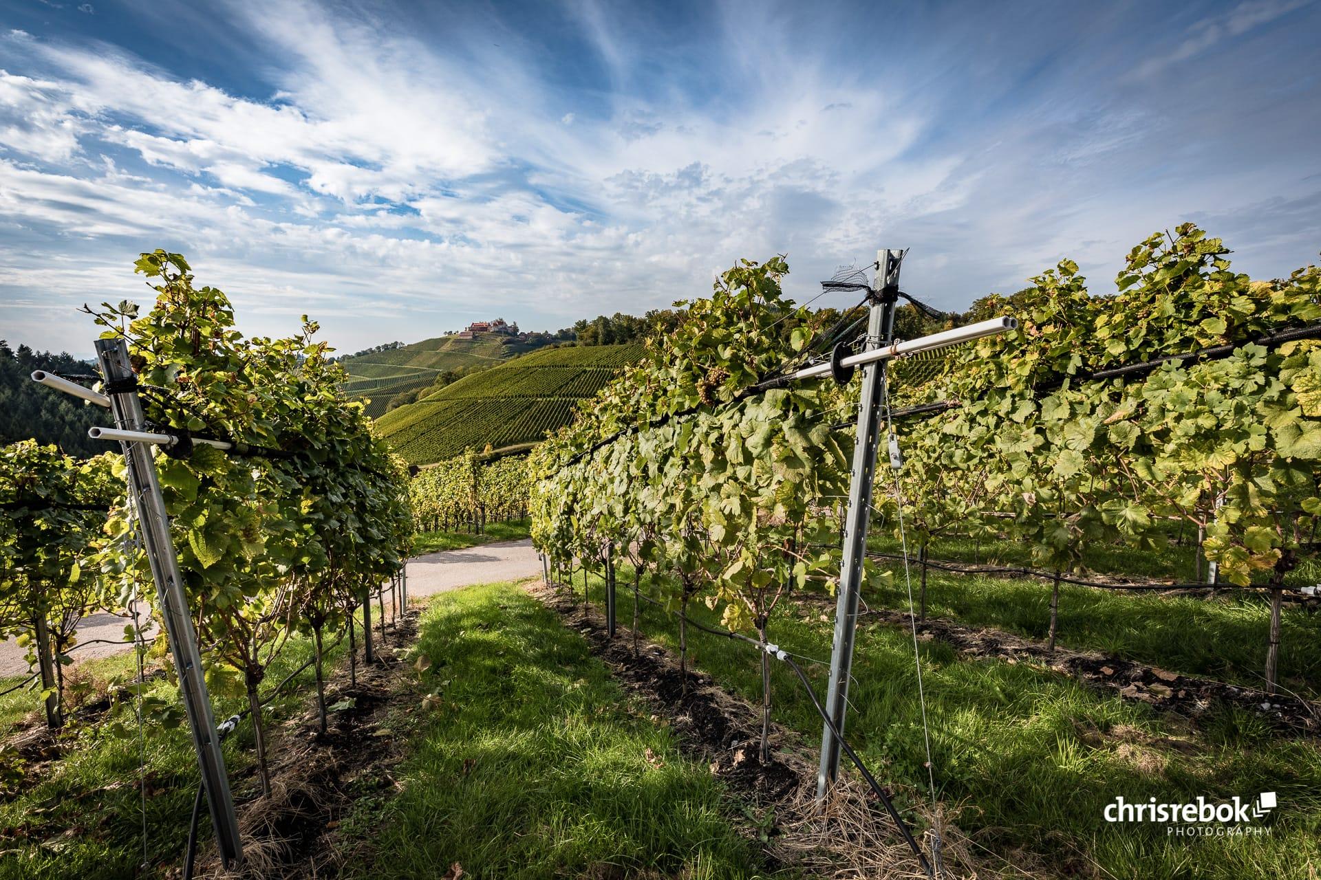 Weinparadies Durbach